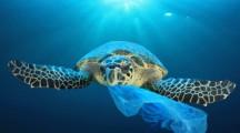 Primo Eco Festival Plastic Free al Porto Turistico di Roma