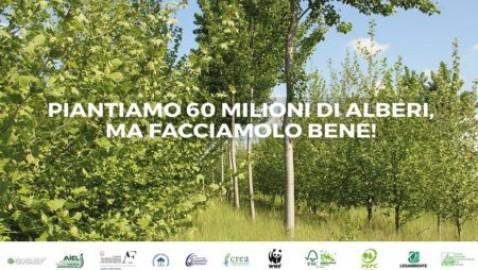 Piantiamo 60 milioni di alberi per contrastare crisi climatica!