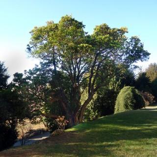 Varese: mappati parchi e alberi monumentali della città