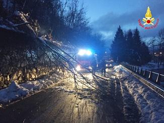 alberi caduti per neve
