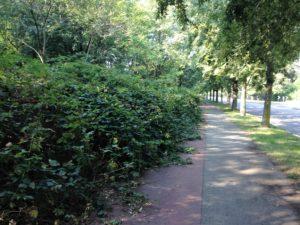 Pista ciclopedonale di via Sant'Anna
