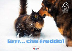 campagna-freddo-2016-ld-564x399